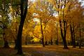 parkové stromy