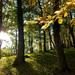 svetlo v lese