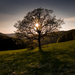 strom múdrosti
