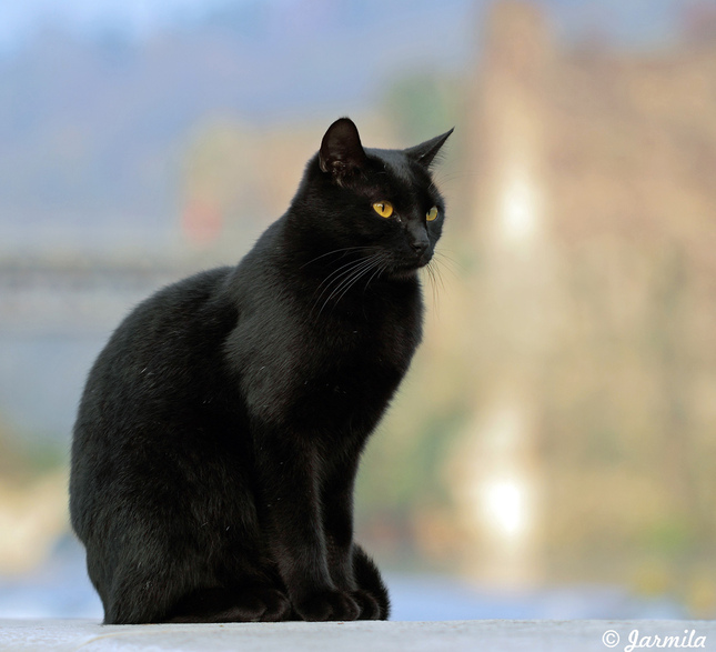 Najlepšie čierna mačička fotky