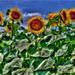 Van Gogh 21 eho storocia