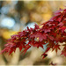 Jesenne' protisvetlo