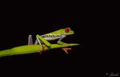 Zelená Žabka s  červenými očami