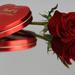 darovana' ruža obveseli srdce