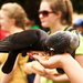 Hladne' holubičky