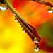 svieže kvetinové kvapky