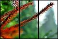 Ihličnatá jeseň
