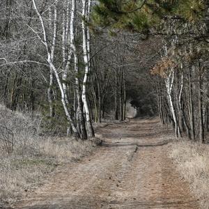 cesta domou