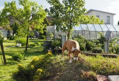 v zahrade u babky