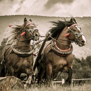 Kone vrané