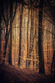 Lesné pohľady