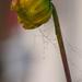 kvet v sieti