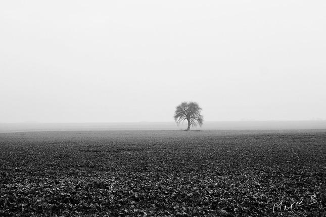 Sám v hmle