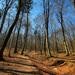 Sila lesa