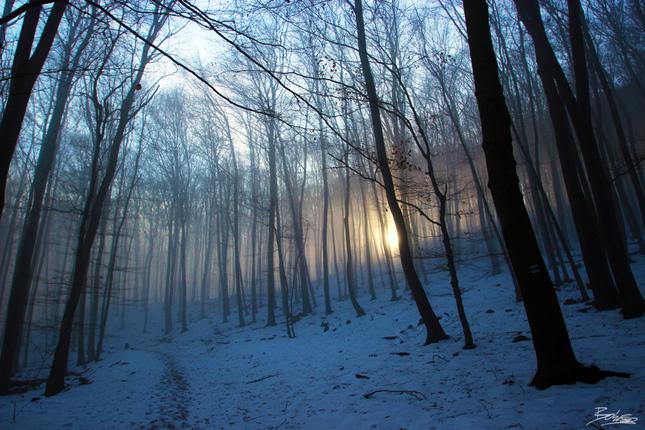 Čaro lesa