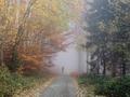 jeseň pod Prednou Holicou