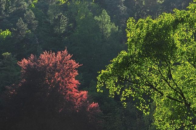 Koruny stromov 2