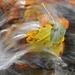 Jesenný potok 4