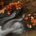 Jesenný potok 1