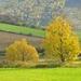 Jesenná krajina 1