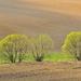 Poľné stromy 1