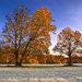 Podzimní ráno v Polanské nivě