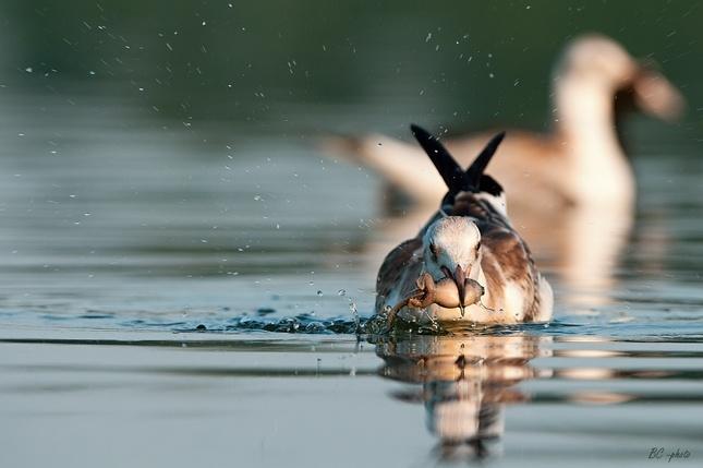 Hody na vode