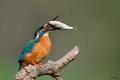 Hop s rybičkou do bruška :-)
