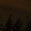 kukurica v noci