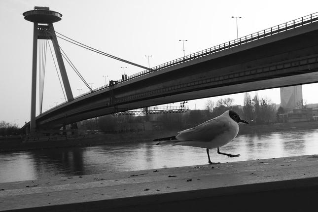 Promenáda pod mostom