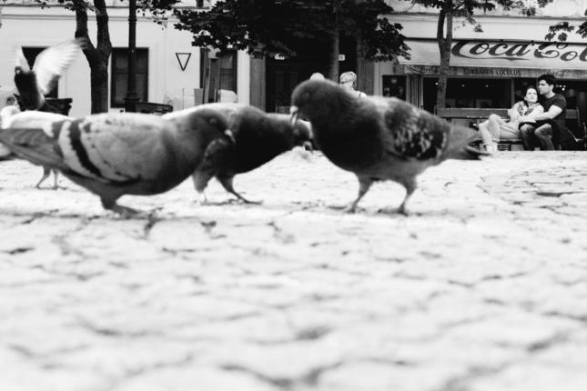 holubí svet 2