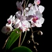 Kvetina (tá z parapetu) II