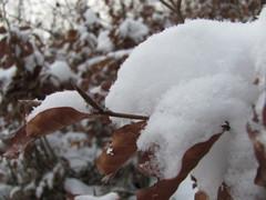 prikryté snehom