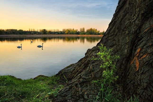 Podvečer na Trnavských rybníkoch