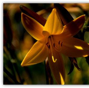 kvet leta