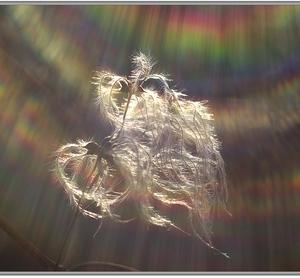 Slnečný vietor