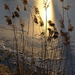 Zimna trava3