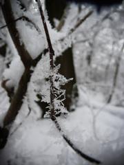 Zimne kvety