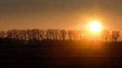 Slnko na stromoch