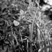 V zajatí tráv
