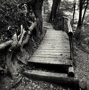 Po lesných chodníkoch