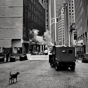 mesto a pes