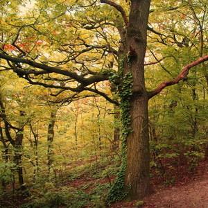 čarovným lesom