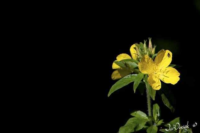 Žltá z temnôt