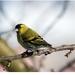... vtáčik maličký :)