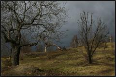 Soumrak stromů