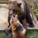 medvedie hrátky