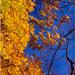 jesen v korunach stromov