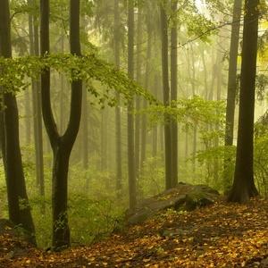 V tajomnom lese.
