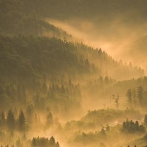 Keď sa hmla do lesa vkráda.